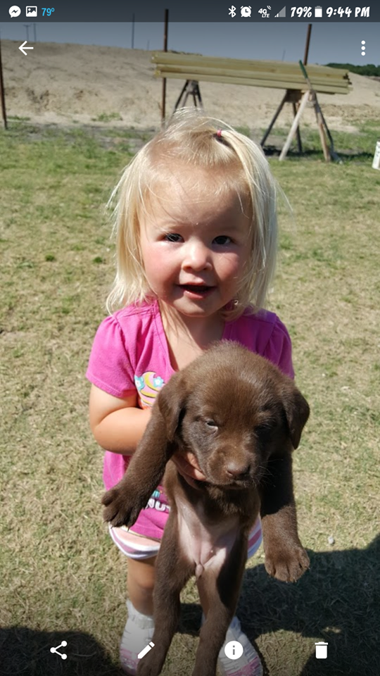 charcoal lab puppy breeder texas